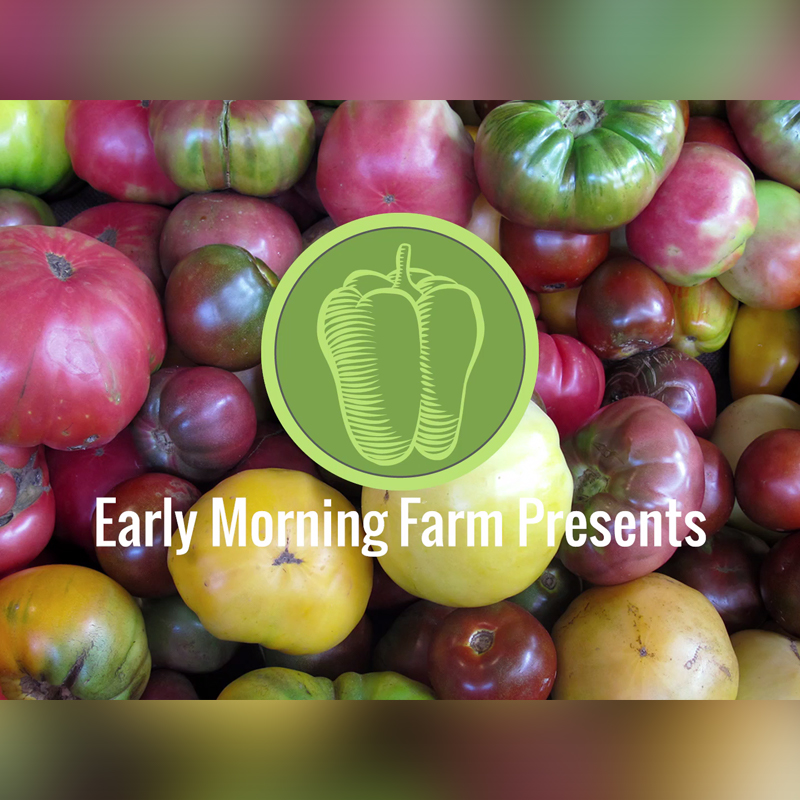 early morning farms